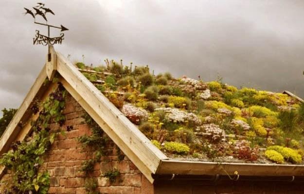 Активное озеленение крыш улучшает экологическую обстановку