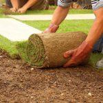 Рулонный газон – современная альтернатива классическому